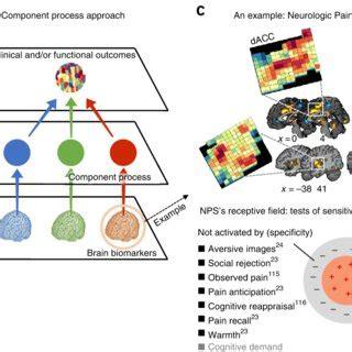 pdf building better biomarkers brain in translational neuroimaging