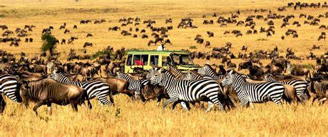 Serengeti National Park - Gova Safari
