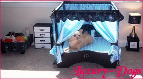chambre de chien une chambre pour vos babydogs luxury dogs