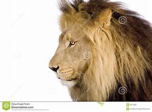 Lion Head Side | www.imgkid.com - The Image Kid Has It!