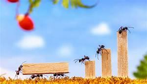 Ameisen Bekämpfen Wohnung : ameisen bek mpfen 4 tipps tricks ~ Michelbontemps.com Haus und Dekorationen