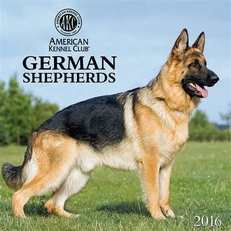 german shepherd calendars