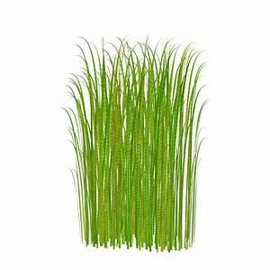 Grass clip art free free clipart images - Cliparting.com