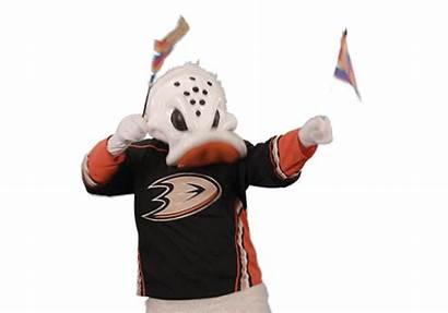 Nhl Wing Wild Sticker Giphy Ducks Anaheim