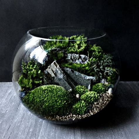 where can i buy moss for a terrarium 565 best images about terrariums and miniature gardening on pinterest
