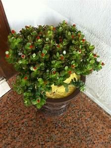Geldbaum Feng Shui : feng shui pflanzen f r harmonie und positive energie im wohnraum ~ Bigdaddyawards.com Haus und Dekorationen