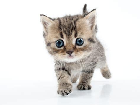 Fluffy Cat Icon