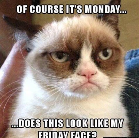 Grumpy Cat Monday Meme - monday quotes happy monday motivational funny quotes and images