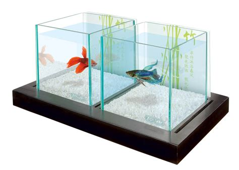 installation d 233 co aquarium poisson combattant