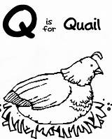 Coloring Quail Preschool Letter Sheets Colouring sketch template