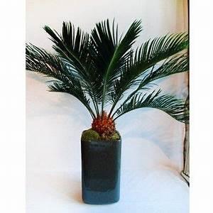 Plantes Exotiques D Intérieur : plante verte exotique interieur ~ Melissatoandfro.com Idées de Décoration