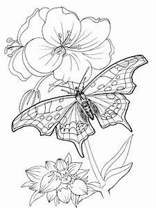 Kids Page  Butterfly Coloring Pages