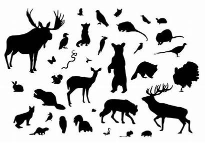 Silhouette Silhouettes Animal Forest Clipart Vectors Wild