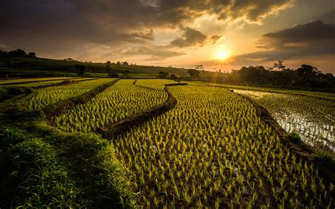 ricefields  ngawi java indonesia photo  big photo