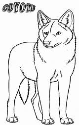 Coyote Coloring Pages Drawing Printable Animal Coyotes Easy Desert Howling Jackal Cool2bkids Animals Getcoloringpages Getdrawings Getcolorings sketch template