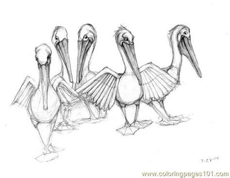 Coloring Pages Brown Pelican (birds> Pelican )