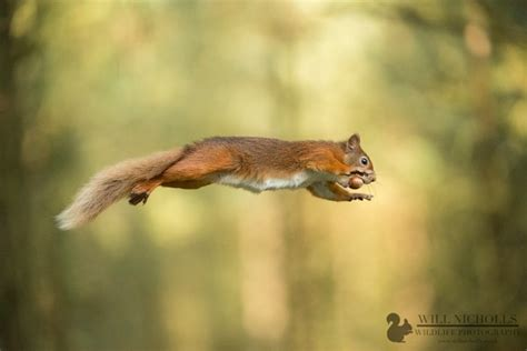 top  tips  wildlife photography