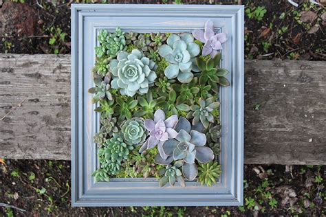succulent wall planter diy a framed succulent wall planter do it yourself