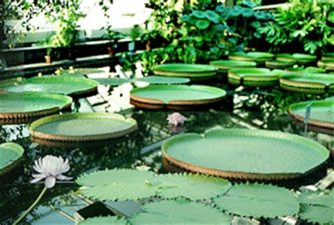 Botanischer Garten Berlin Dauer by Haus Tropische Sumpfpflanzen Bgbm