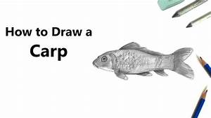 How to Draw a Carp Fish with Pencils [Time Lapse] - YouTube