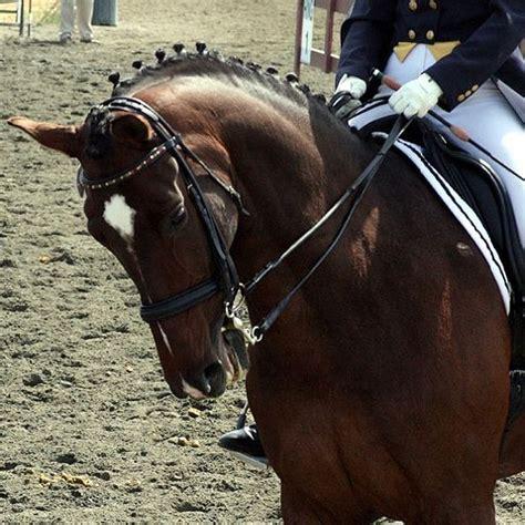 athlete equine healthy create horse