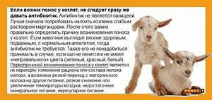 От артроза для животных