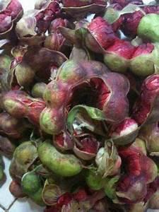 Guamuchiles   Comida de Colima   Pinterest