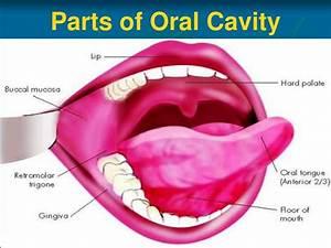 Lips Anatomy Ppt