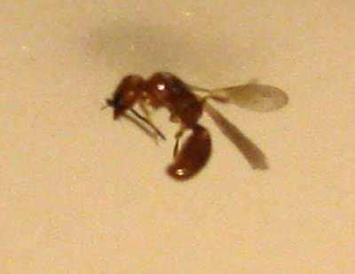 insekten gefunden schaedlinge
