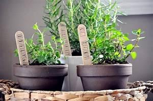 Herbes Aromatiques En Pot : herbes aromatiques en pot la d co maison id ale ~ Premium-room.com Idées de Décoration