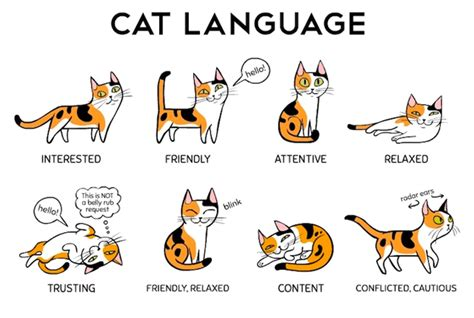 cat language understanding cat language frenzy walking