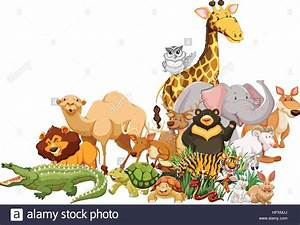 Different types of wild animals together illustration ...