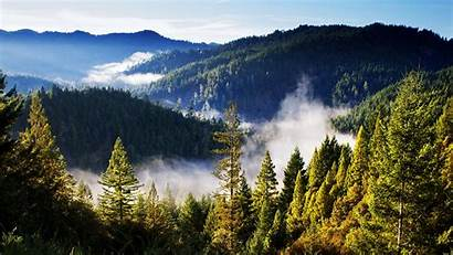 Forest Mountain Mountains Landscape Pine Trees Mist