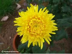 Names Of Yellow Flowers Ialovenifo