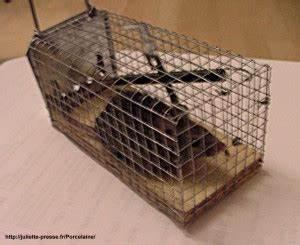 Comment Se Débarrasser Des Souris Dans Une Maison : comment tuer des souris dans une maison taupier sur la france ~ Nature-et-papiers.com Idées de Décoration