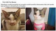 Really Sad Crying Cats
