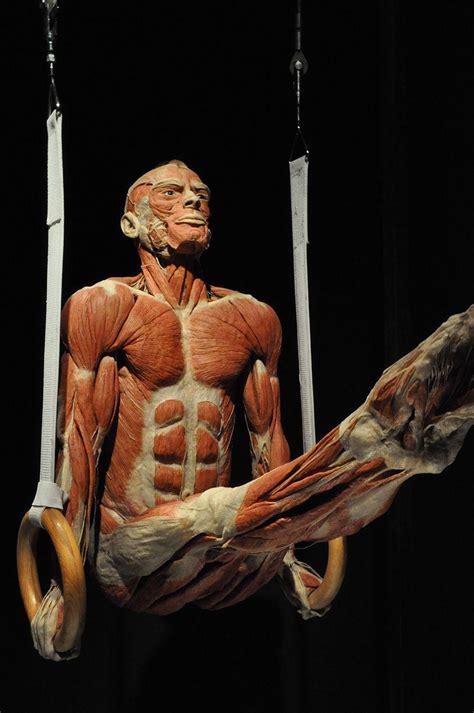 jump tests cadaver alternative  anatomy ed peoria