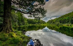 Wallpaper Forest  Summer  Lake  Reflection  Tree  England