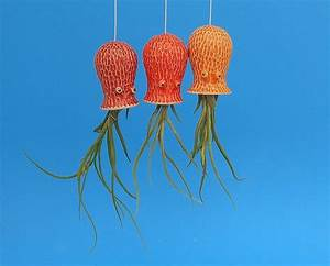Hanging Planters Use Air Plants To Bring Adorable Ocean