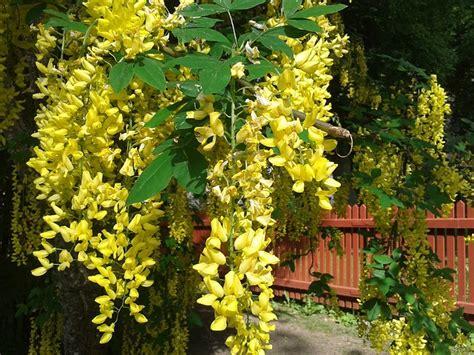 tuin zonder giftige planten kinderen geen giftige planten in je tuin website4mama nl