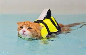 cats aquatics starfish underwater photography