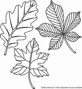 Feuilles D Automne à Imprimer : la nature en coloriage feuille d 39 automne ~ Nature-et-papiers.com Idées de Décoration