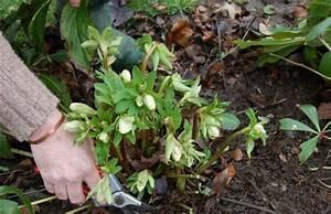 Gartenarbeit Im Februar : gartenarbeit im februar den garten auf den fr hling ~ Lizthompson.info Haus und Dekorationen