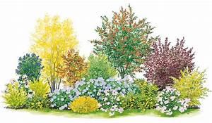 Blumenbeete Zum Nachpflanzen : farbenfroher sichtschutz bl tenhecken anlegen und pflegen garten pinterest ~ Yasmunasinghe.com Haus und Dekorationen