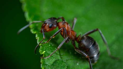 eliminare le formiche dal giardino come eliminare le formiche dal giardino