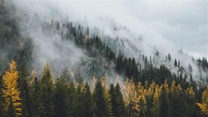 Pine Forest Tree Wallpapers Misty Desktop Trees
