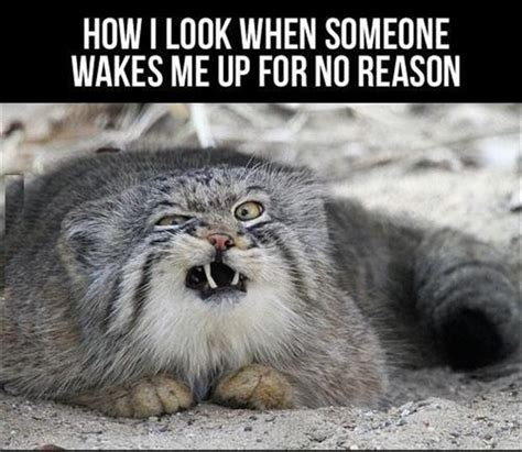 Funny Animal Pictures - 32 Pics