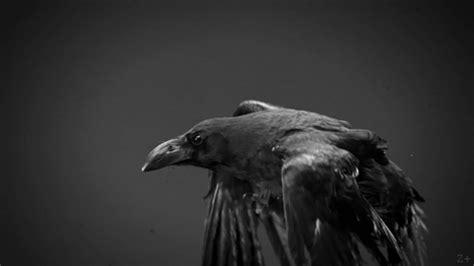 corbeau bureau un corbeau ressemble t il a un bureau diaval