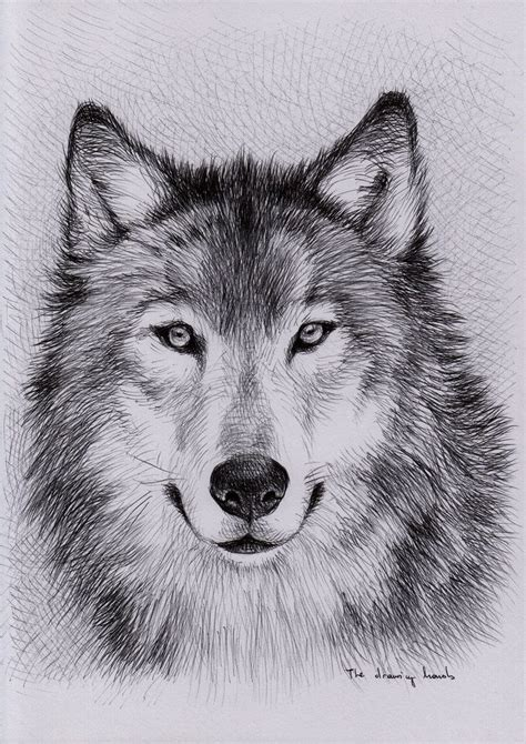 unique wolf drawings google search art wolf painting
