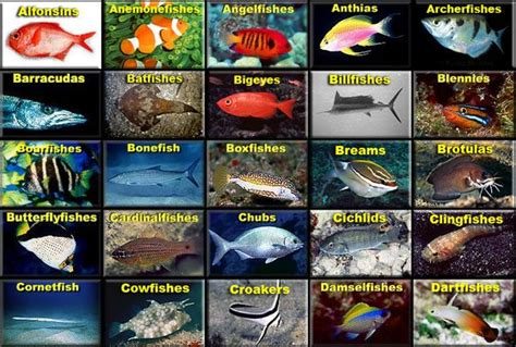 amazing site saltwater fish identification emphasis